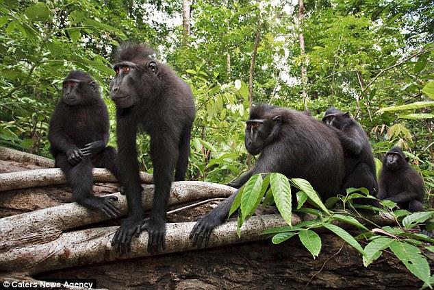 动物摄影家为猴子拍照