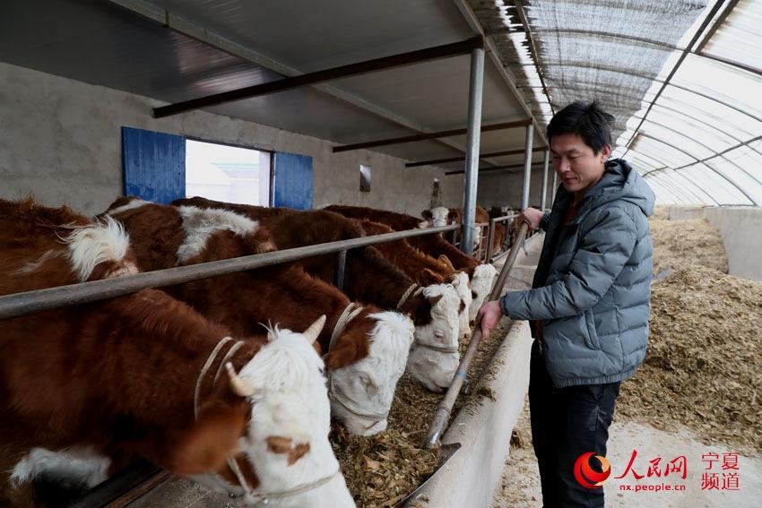 泾源县:养殖业助农脱贫致富