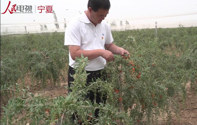 红寺堡新庄集乡:发展特色产业 助力脱贫攻坚