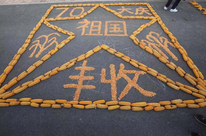 青铜峡:黄河之滨富饶地 农家玉米晒丰收