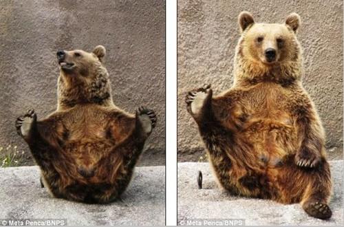 芬兰动物园棕熊做瑜伽