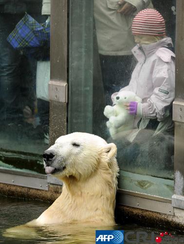 """德国柏林一家动物园的北极熊"""""""